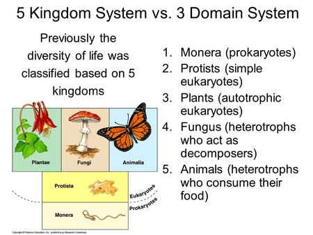 5 Kingdom System vs. 3 Domain System Previously the diversity of life was classified based on 5 kingdoms 1.Monera (prokaryotes) 2.Protists (simple eukaryotes)