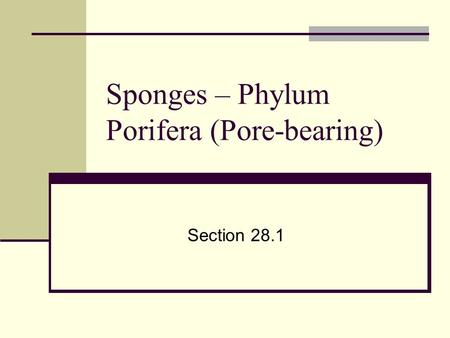 Sponges – Phylum Porifera (Pore-bearing) Section 28.1.