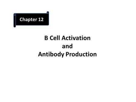 B Cell Activation and Antibody Production Chapter 12.
