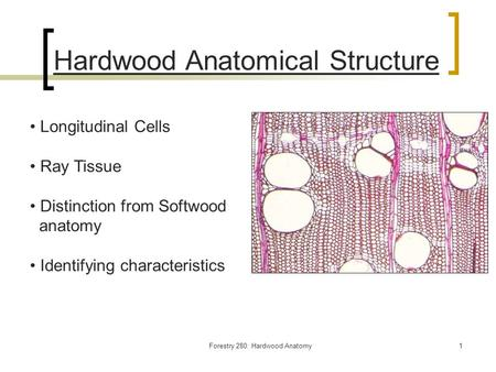 Forestry 280: Hardwood Anatomy