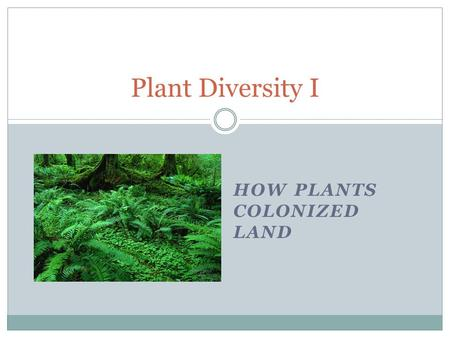 HOW PLANTS COLONIZED LAND Plant Diversity I. Fungi EUKARYA Trypanosomes Green algae Land plants Red algae Forams Ciliates Dinoflagellates Diatoms Animals.