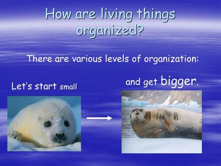 How are living things organized? There are various levels of organization: and get bigger. Let's start small.