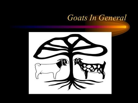 Goats In General. Breeds of Goats Goats were a common sight on early European sailing ships They were desirable because of their relatively small size.