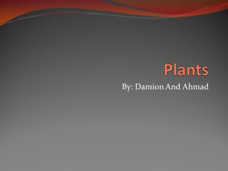 By: Damion And Ahmad. Plant Needs A plant needs sun, water, air, and space. A flower can grow from a seed. Then the seed turns in to a spout. Then it.