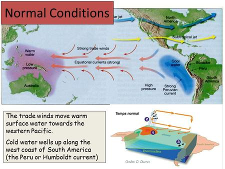 Normal Conditions The trade winds move warm surface water towards the western Pacific. Cold water wells up along the west coast of South America (the Peru.