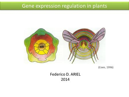 Federico D. ARIEL 2014 (Coen, 1996) Gene expression regulation in plants.