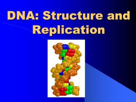 DNA: Structure and Replication DNA DNA. DNA is often called the blueprint of life. DNA contains the instructions for making proteins within the cell.