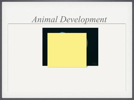 Animal Development. The Mystery of Development The main problem of embryology is this: How, in the course of development, does a cell of one type.