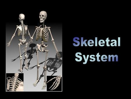 3 Functions of the Skeleton Movement Bones meet to form JOINTS. Tendons attach muscles (which cause the movement) to bones. Support We are able to stand.