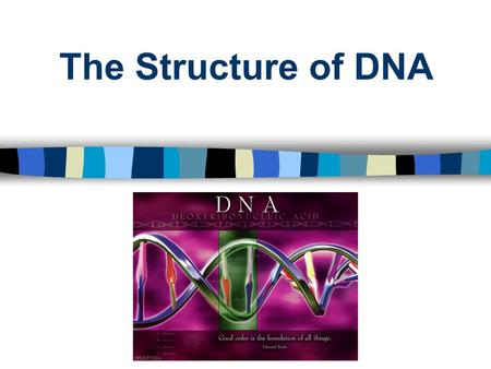 "The Structure of DNA. DNADNA The blueprint of life (instructions for all living things). D= ""deoxyribose"" N= ""nucleic"" A= ""acid"" DNA = Deoxyribonucleic."