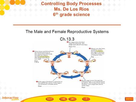 The Male and Female Reproductive Systems Ch.13.3 Controlling Body Processes Ms. De Los Rios 6 th grade science.