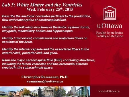 Lab 5: White Matter and the Ventricles Christopher Ramnanan, Ph.D. Describe the anatomic correlates pertinent to the production, flow.