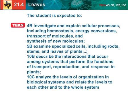 21.4 Leaves TEKS 4B, 5B, 10B, 10C The student is expected to: 4B investigate and explain cellular processes, including homeostasis, energy conversions,