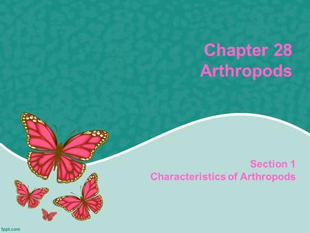 Chapter 28 Arthropods Section 1 Characteristics of Arthropods.