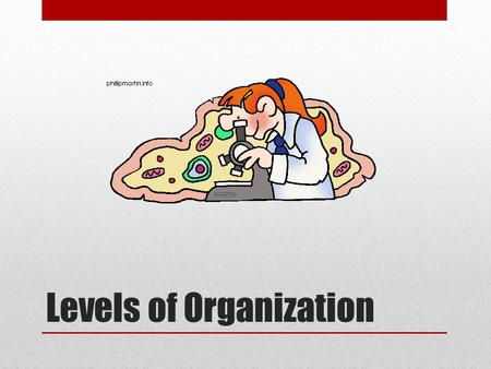 Levels of Organization. Cell—Basic unit of structure and function in organisms. Some organisms, like bacteria and protists, are unicellular (made entirely.