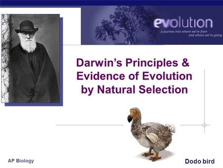 AP Biology 2007-2008 Darwin's Principles & Evidence of Evolution by Natural Selection Dodo bird.