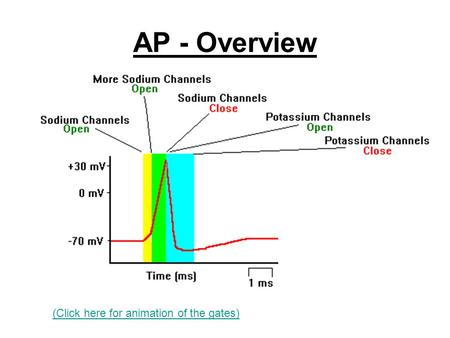 AP - Overview (Click here for animation of the gates)