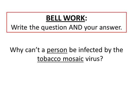 BELL WORK: Write the question AND your answer. Why can't a person be infected by the tobacco mosaic virus?