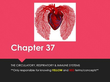 Chapter 37 THE CIRCULATORY, RESPIRATORY & IMMUNE SYSTEMS **Only responsible for knowing YELLOW and RED terms/concepts** THE CIRCULATORY, RESPIRATORY &