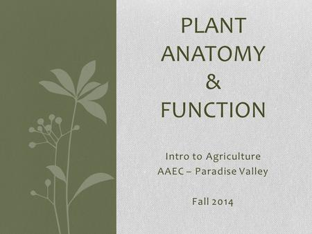 Intro to Agriculture AAEC – Paradise Valley Fall 2014 PLANT ANATOMY & FUNCTION.