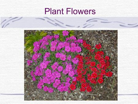 Plant Flowers. What are the role of flowers for plants?