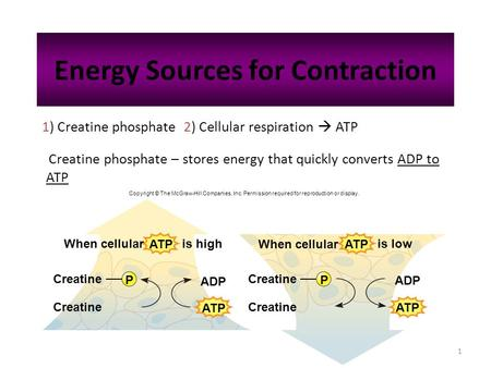 1 Energy Sources for Contraction Creatine phosphate – stores energy that quickly converts ADP to ATP 1) Creatine phosphate 2) Cellular respiration  ATP.