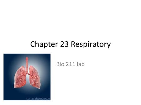 Chapter 23 Respiratory Bio 211 lab. Copyright © 2009 Pearson Education, Inc., publishing as Pearson Benjamin Cummings Components of the Respiratory System.
