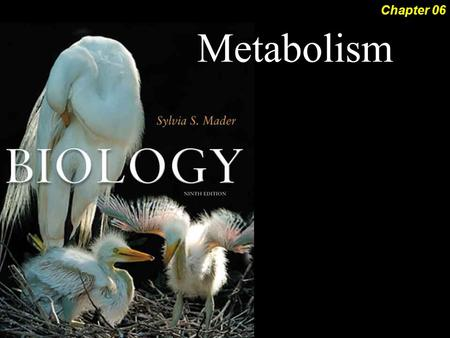 Metabolism Chapter 06. Metabolism 2Outline Forms of Energy  Laws of Thermodynamics Metabolic Reactions  ATP Metabolic Pathways  Energy of Activation.