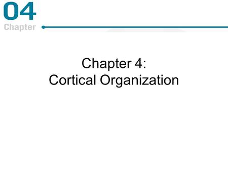 Chapter 4: Cortical Organization. An Exploration of Spatial Organization Electronic map on V1 –Retinotopic map is an electron map of the retina on the.