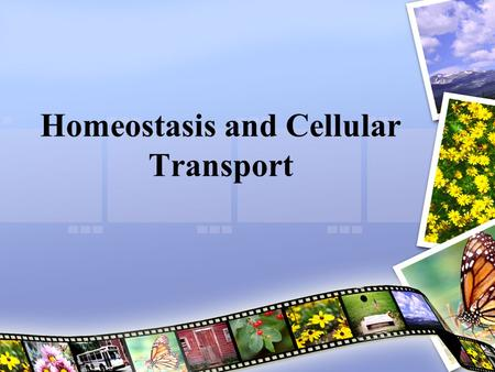 Homeostasis and Cellular Transport. Cell Membrane A phospholipid bilayer that forms the outer membrane of a cell Is selectively permeable Controls which.