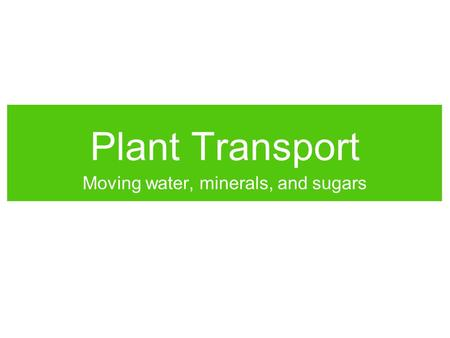 Plant Transport Moving water, minerals, and sugars.