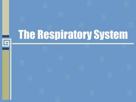 The Respiratory System. Anatomy What makes up the Respiratory System? Consists of the lungs and air passages Takes in oxygen and removes carbon dioxide.