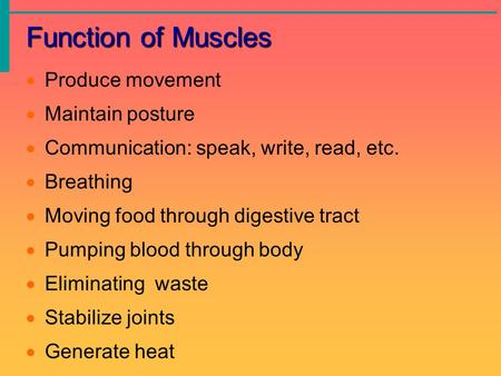 Function of Muscles  Produce movement  Maintain posture  Communication: speak, write, read, etc.  Breathing  Moving food through digestive tract 