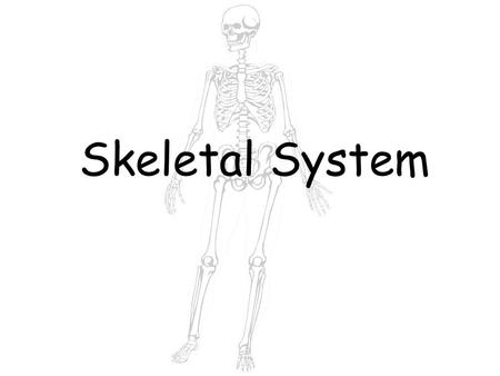 Skeletal System. The skeletal system is made up of 206 bones. When you were born you had over 300 bones. As you grew, some of these bones began to fuse.