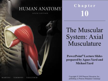 Copyright © 2008 Pearson Education, Inc., publishing as Benjamin Cummings C h a p t e r 10 The Muscular System: Axial Musculature PowerPoint ® Lecture.