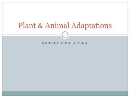 BIOLOGY EOCT REVIEW Plant & Animal Adaptations. Adaptations in Plants Adaptation: any structure or behavior that increases an organism's chance of survival.