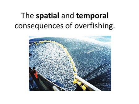 The spatial and temporal consequences of overfishing.