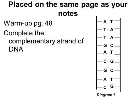Placed on the same page as your notes Warm-up pg. 48 Complete the complementary strand of DNA A T G A C G A C T Diagram 1 A T G A C G A C T T A A C T G.