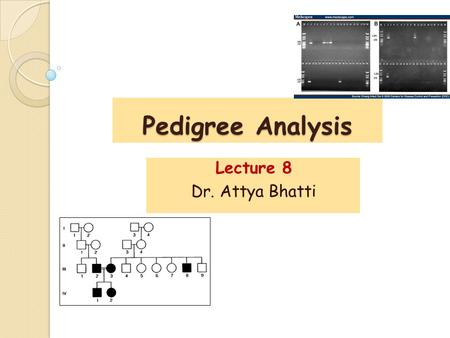 Pedigree Analysis Lecture 8 Dr. Attya Bhatti. A pictorial representation of a family history, essentially a family tree that outlines the inheritance.