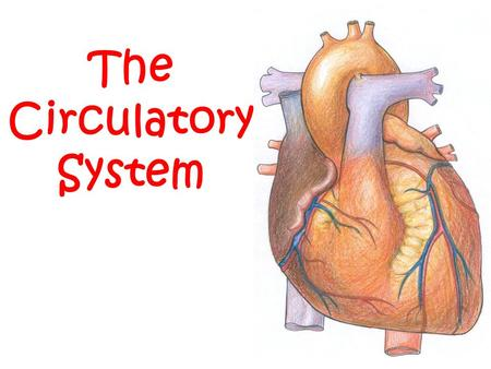 The Circulatory System. The Bloodmobile Jobs of the Circulatory System: Transport gases, nutrients, and waste to and from all your cells Help fight disease.