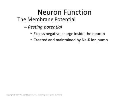 Neuron Function The Membrane Potential – Resting potential Excess negative charge inside the neuron Created and maintained by Na-K ion pump Copyright ©