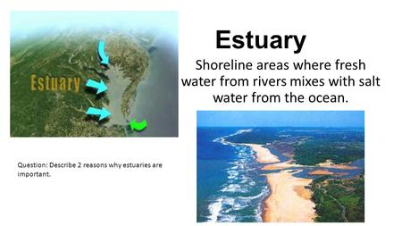 Estuary Shoreline areas where fresh water from rivers mixes with salt water from the ocean. Question: Describe 2 reasons why estuaries are important.