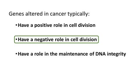 Have a positive role in cell division Have a negative role in cell division Have a role in the maintenance of DNA integrity Genes altered in cancer typically: