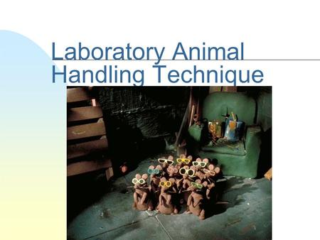 Laboratory Animal Handling Technique. Escape easily Very likely to bite.