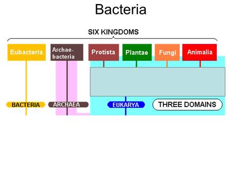 Bacteria. -Prokaryotes – no cell nucleus, no membrane organelles -unicellular -have a cell wall.