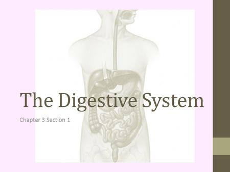 The Digestive System Chapter 3 Section 1. Digestive System Organs that break down food so it can be used by the body. Food passes through a long tube.