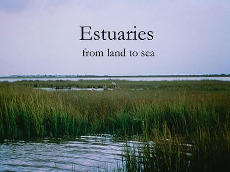 Estuaries from land to sea. What is an Estuary?  An estuary is a coastal area where freshwater from rivers and streams mixes with saltwater from the.