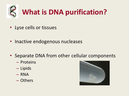What is DNA purification? Lyse cells or tissues Inactive endogenous nucleases Separate DNA from other cellular components – Proteins – Lipids – RNA – Others.