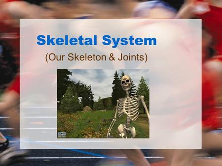 Skeletal System (Our Skeleton & Joints). Function Protects The skeleton protects delicate organs -the skull protects the brain -the vertebral column protects.