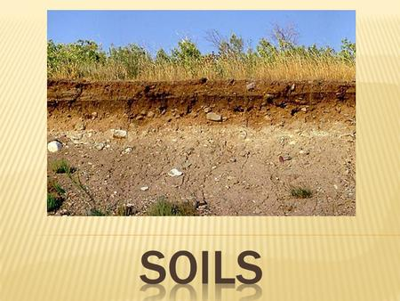  Essential Question: How does soil form, and what purposes does it serve?  Objectives: 1. Describe the functions of soil 2. Describe the factors of.